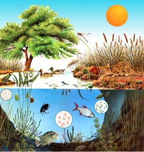 Los Ecosistemas Del Mundo 1993aa S Blog